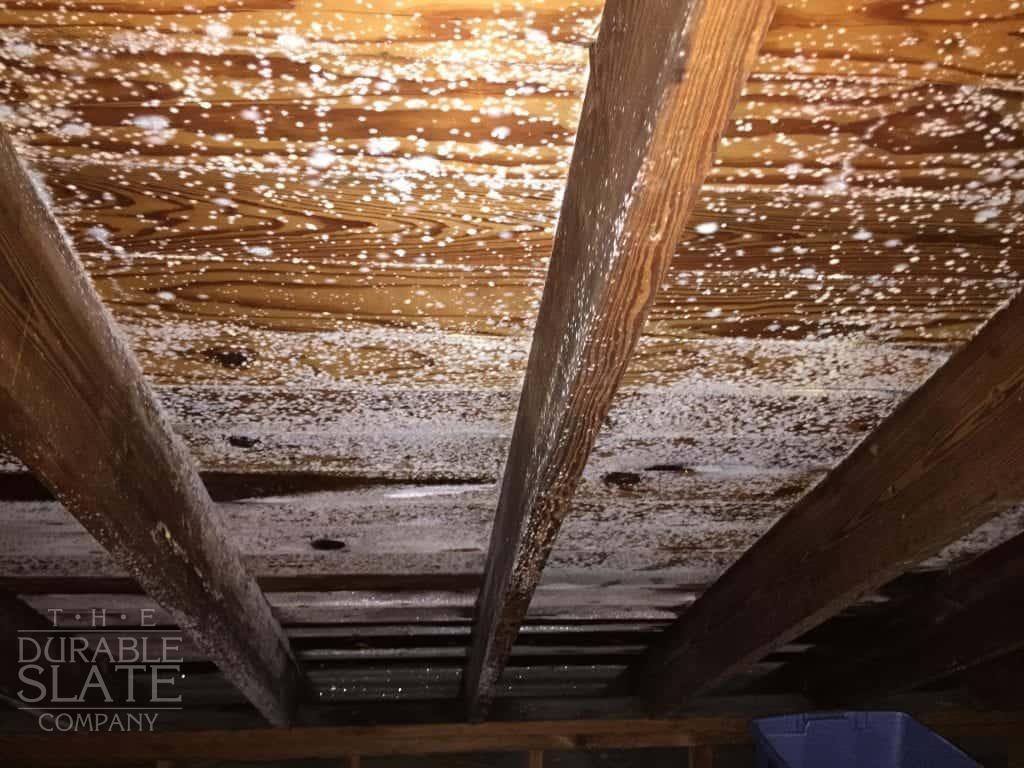 mildew growing in an attic because of a roof leak